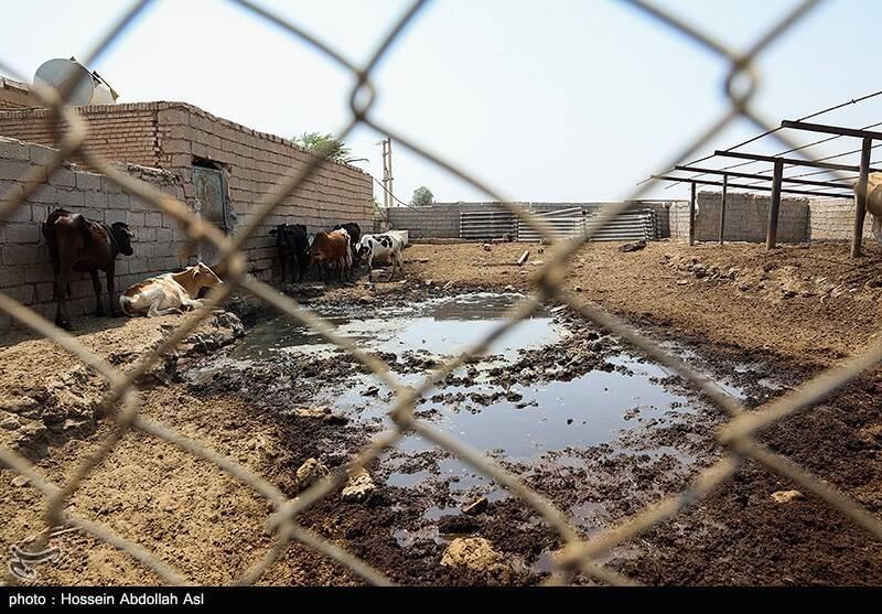 آرامش به شهرهای خوزستان بازگشت +عکس