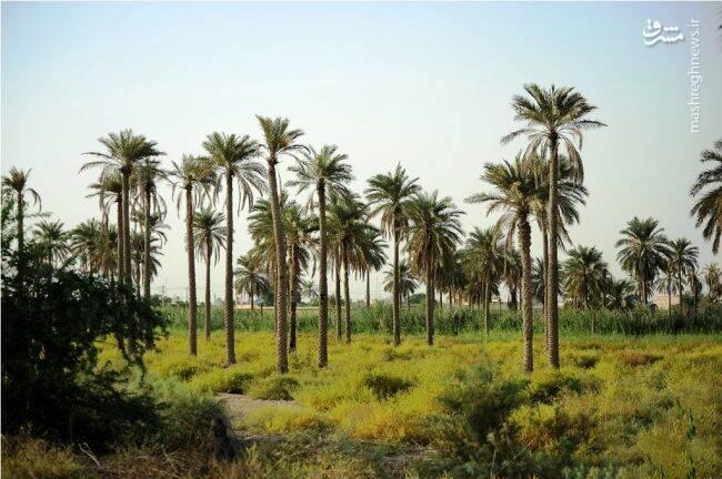 فیلم/ اینجا جزیره مینو در خوزستان است