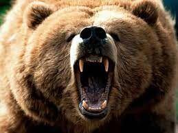 حمله خرس وحشی به دو مرد کوهرنگی +فیلم
