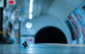 دعوای ۲ موش در متروی لندن!+ عکس