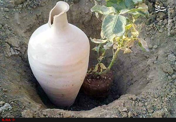 وقتی دانشمندان کشاورزی دنیا به آبیاری زیرسطحی ایران میرسن