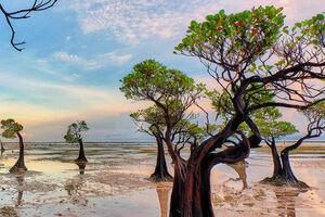 جنگل های مانگرو جنگل مانگرو