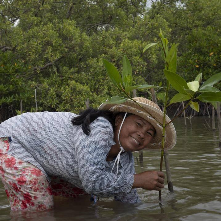 از «مانگرو»ها چه میدانید؟ +عکس
