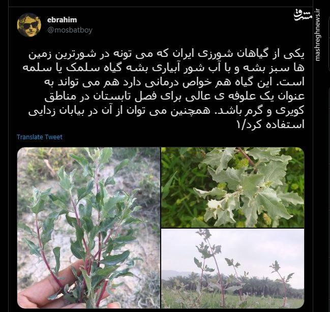 چرا از این گیاهان کویری برای علوفه استفاده نمی کنیم؟