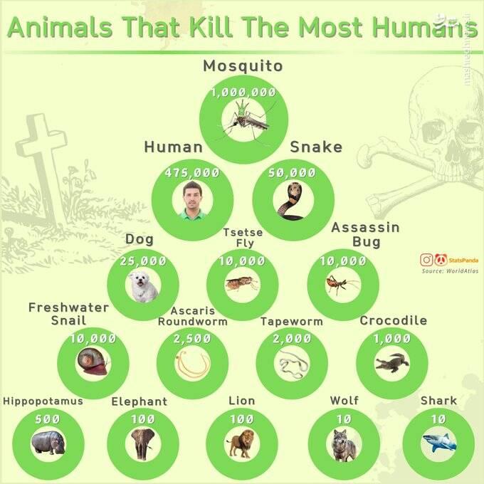 سگ ها هر سال چند انسان را می کشند؟