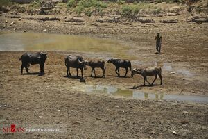 افزایش رهاسازی آب در سدهای گتوند، دز و کرخه برای رفع مشکل کم آبی خوزستان