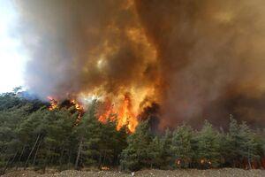 فیلم/ آتش به جنگلهای یونان رسید