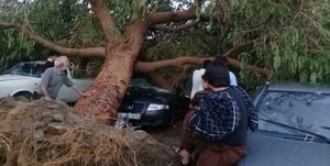 فیلم| خسارت طوفان و باران در جیرفت