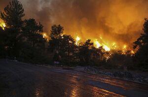 نمایی عجیب از جنگل آنتالیا پس از آتش سوزی+ فیلم