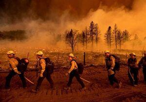 فیلم/ آتش سوزی در جنگلهای الجزایر
