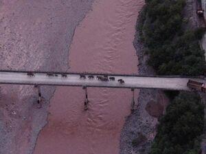 عکس/ عبور گله فیلها از روی پل