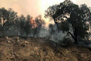 الجزایر: تلآویو مقصر آتشسوزی جنگلهاست