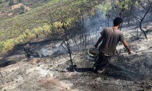 آتشسوزی جنگلهای الجزایر پس از کشته شدن ۶۹ نفر مهار شد