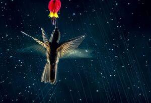 تصاویر برتر مسابقه عکاسی از پرنده