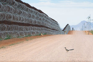 برترین تصویر مسابقه عکاسی پرنده