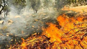 شعله های آتش جنگلهای دنا را فرا گرفت