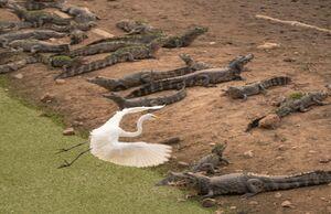 عکس/ پرواز از روی شکارچیها