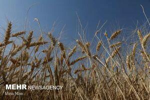 قیمت تضمینی محصولات کشاورزی ابلاغ شد