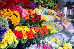 فرار مالیاتی ۳۰۰۰ دلال مجازی گل فروش در تهران