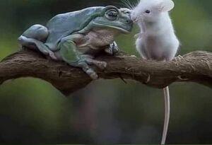 عکس/ عاقبت موش کنجکاو