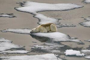 تصویری دردناک از قطب شمال