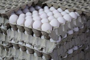 قیمت واقعی هر شانه تخم مرغ ۳۶هزار تومان است