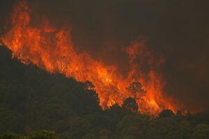 عکس/ آتش سوزی جنگلهای جنوب اسپانیا