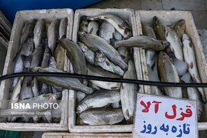 چرا ماهی گران شد؟