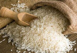تولید برنج کشور ۱۸.۵ درصد به دلیل خشکسالی کاهش یافت
