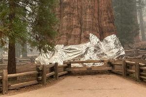 عکس/ بزرگترین درخت جهان آلومینیوم پیچ شد