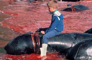 سلاخی کردن دلفینها توسط یه مشت نایس ایراد نداره؟