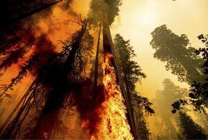 تصویری خوفناک از آتش سوزی کالیفرنیا