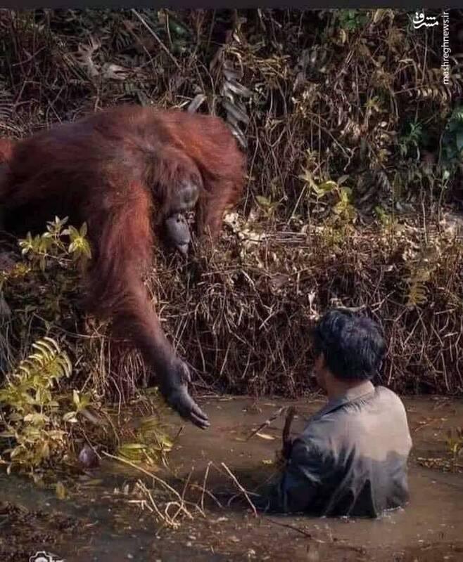 عکسی از یک میمون که صحنهای احساسی را رقم زد!