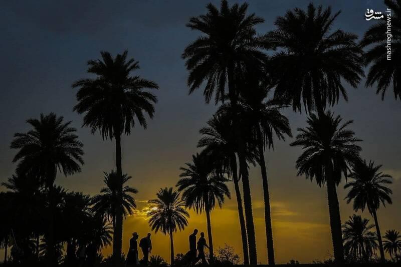 پیادهروی زوار اربعین در سایهسار نخلها +عکس