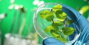 توسعه گیاهانی که واکسن تولید میکنند