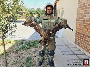 عکس/ صید عقاب در دانشگاه شاهد