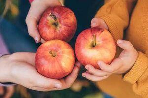 سیب خوردن روزها باعث لاغری میشود یا شب؟