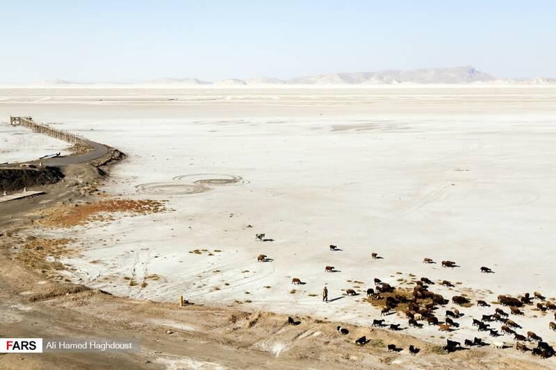 چوپانی در حال عبور دادن گله گوسفندان خود از نمک سفت شده کف دریاچه ارومیه در بندر رحمانلو هستند.