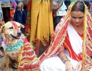 ازدواج با سگ به بهانه نجات از پلیدی و خباثت! +عکس