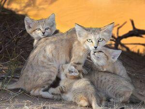 نجات یک قلاده گربه جنگلی گرفتار شده در چاه +فیلم