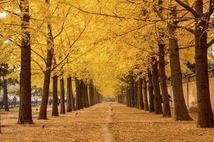 عکس/ پاییز چینی
