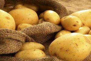 مزایا و مضرات مصرف سیب زمینی