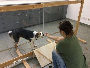 سگها قابلیت تشخیص کدام رفتار انسانها را دارند؟