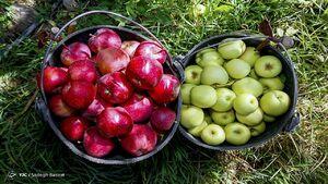 افزایش ۱۰ درصدی قیمت میوه در بازار +جدول