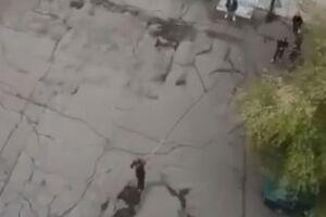 فیلم/ سقوط مرگبار دختر روس