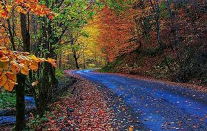 عکس/ پاییز هزار رنگ روستای حیران