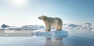 عکس/ خطر آب شدن یخهای قطب شمال