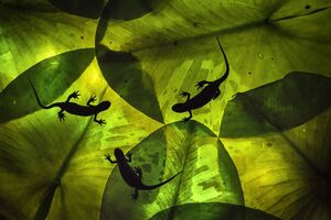 عکس/ برندگان مسابقه عکاسی «کلوزآپ» ۲۰۲۱