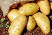 چه سیب زمینیهایی را نباید مصرف کرد؟