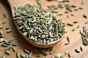 رازیانه؛ گیاهی که درمان دردهای گوارشیتان میشود